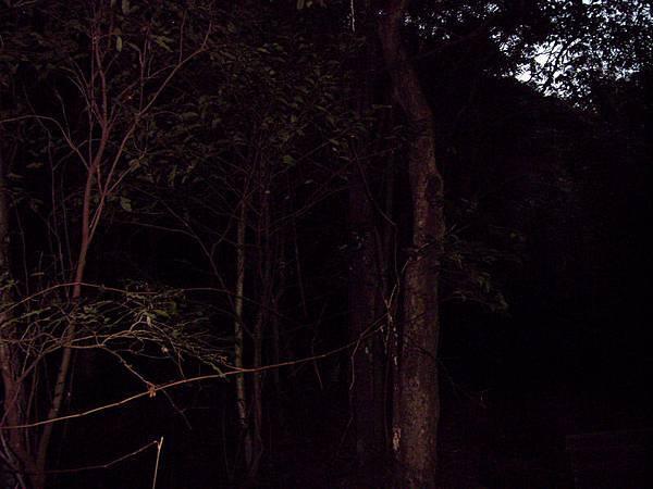 入夜的山腳
