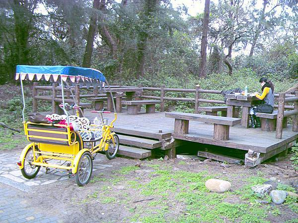 漂流木公園野餐