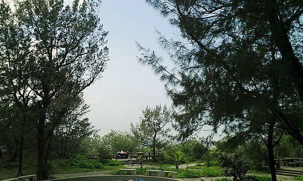 漂流木公園