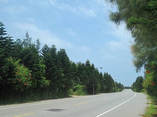 防風林道路
