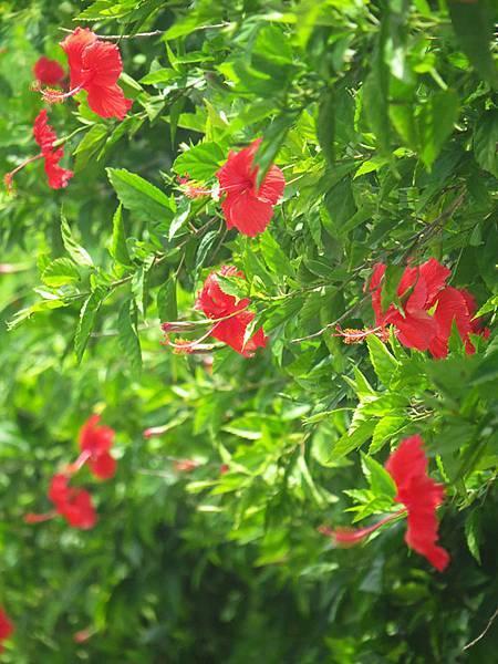 防風林的小花
