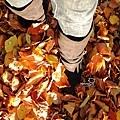 2015 Autumn