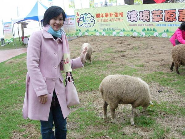 很有趣的綿羊