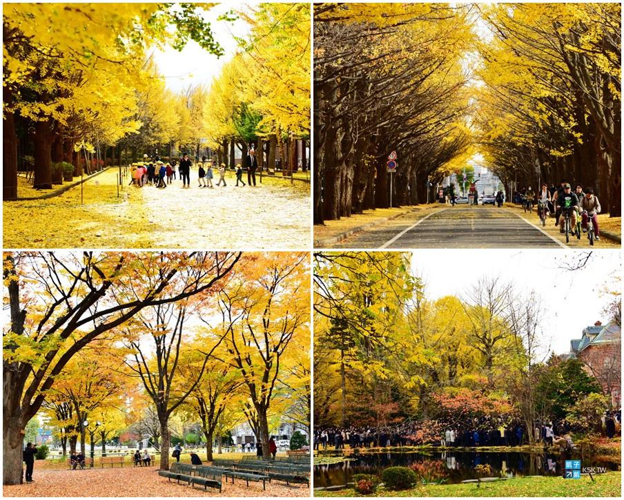 札幌市區銀杏景點統整-KSK.jpg