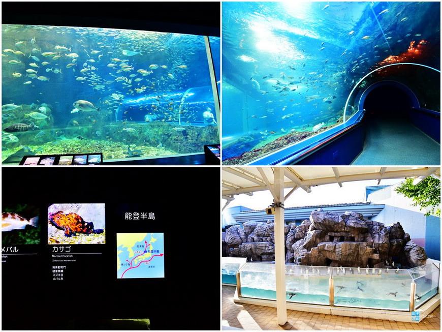 新潟水族館1.jpg