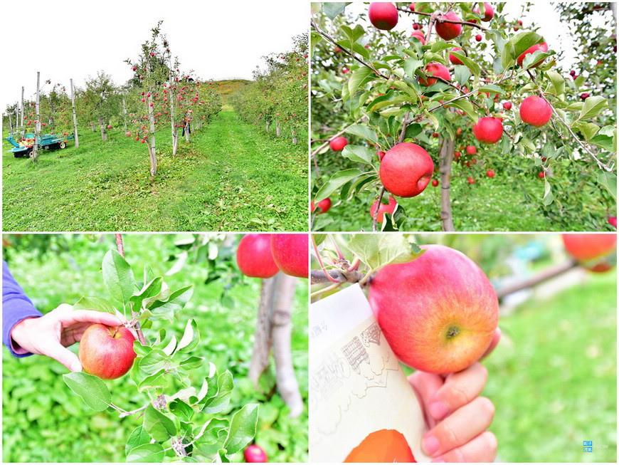 弘前蘋果公園5.jpg