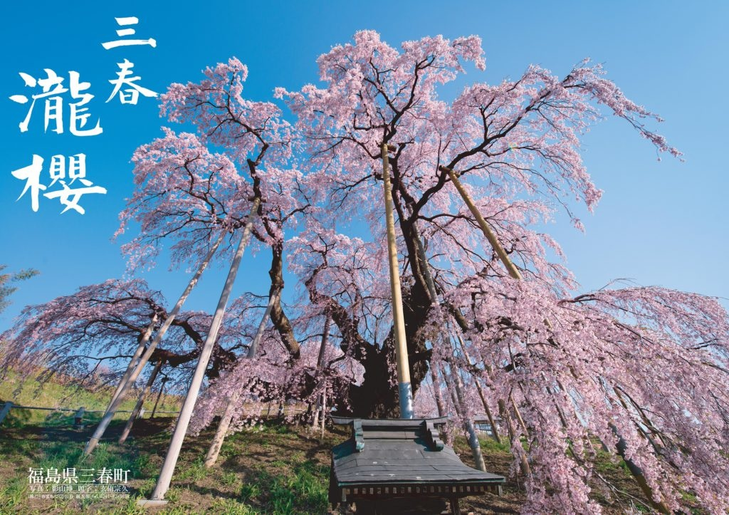 2019三春滝桜-1024x723.jpg