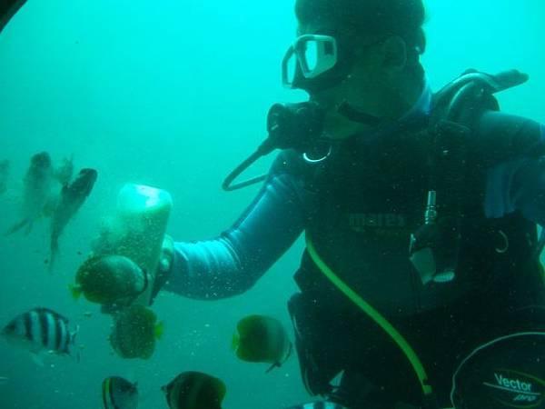 潛水員和魚兒們