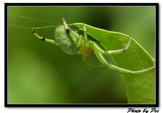 綠蜘蛛~~((對焦到底對到哪去了!!!