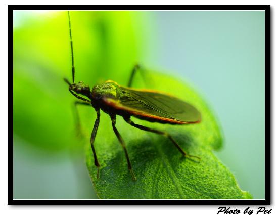 蟲蟲...靠好近...快暈了~囧