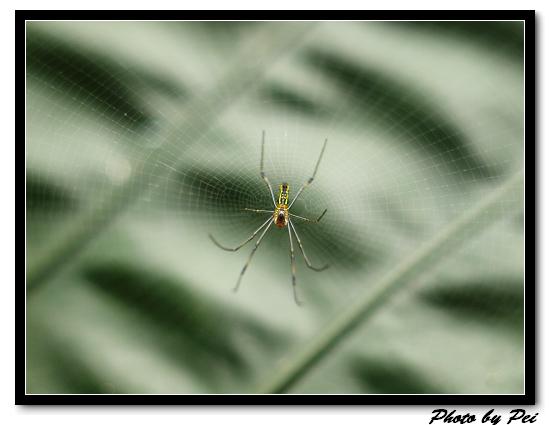 蜘蛛...