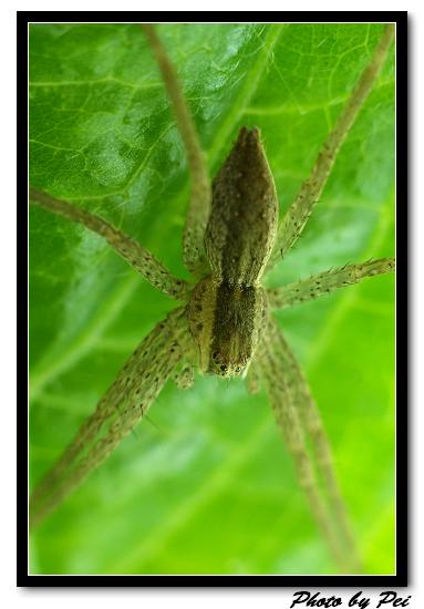 """蜘蛛蜘蛛蜘蛛又是蜘蛛~這天都是蜘蛛~不像第一次去時都是蜻蜓~>""""<"""