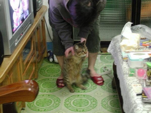 我和我家的喵