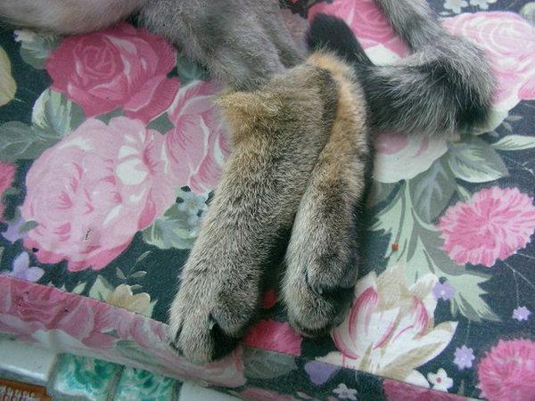 穿毛靴的貓XD