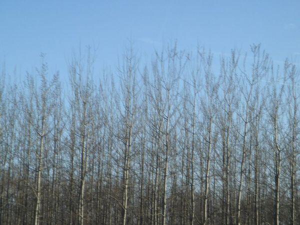 美麗的枯樹