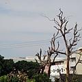 我熱愛的枯樹+天空