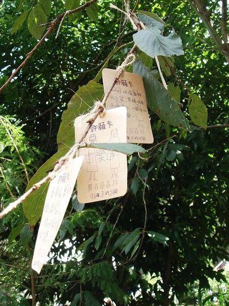 樹上綁滿的許願卡