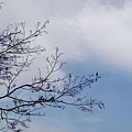 枯樹+天空