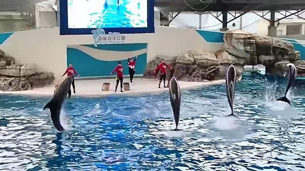 海洋公園海豚傳說-跳浪奇緣_20200503220529191.mp4_000090920