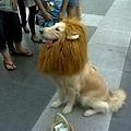 獅子...?!