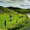 喜羊羊與灰太狼大和解...?!