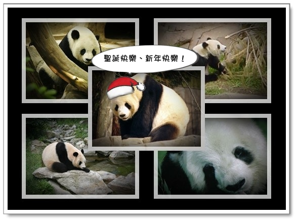 貓熊祝賀聖誕夜快樂