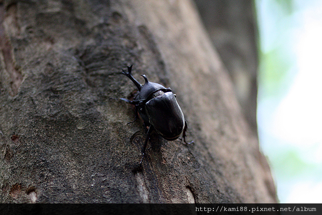20120628甲蟲 (2)