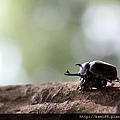 20120628甲蟲 (4)