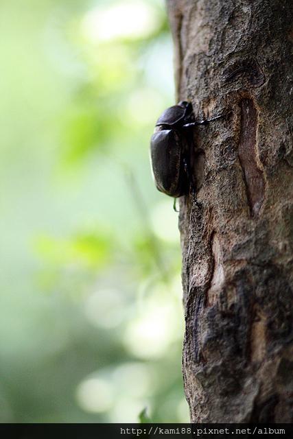 20120628甲蟲 (5)