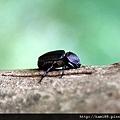 20120628甲蟲