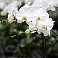 20120629花 (2)