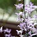 20120629花