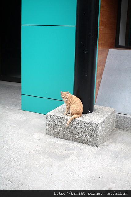 20120629貓咪