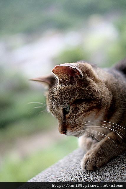 20120729台北候硐 貓咪 (2)