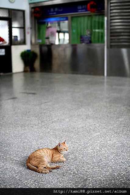 20120729台北候硐 貓咪 (9)