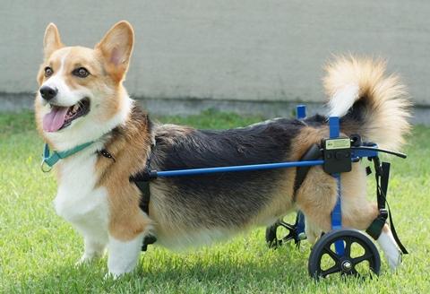 wheelch