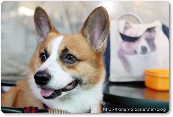 Corgis%20&%20Friends101212-062.jpg