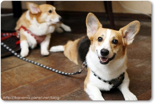 Corgis%20&%20Friends101212-094.jpg