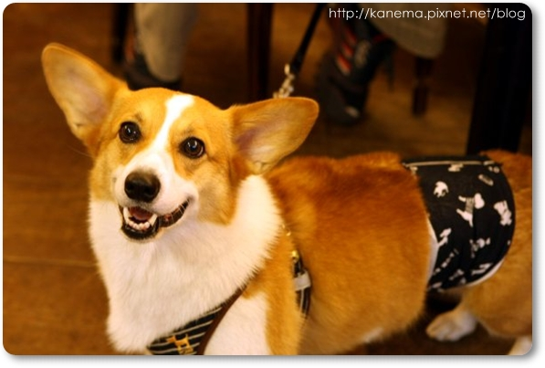 Corgis%20&%20Friends101212-010.jpg