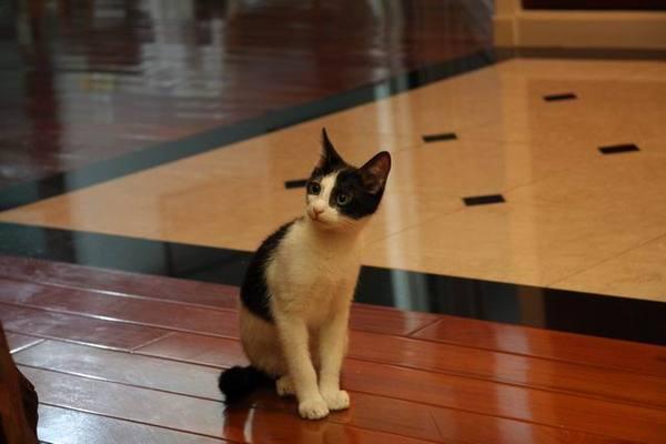 080118優雅的貓