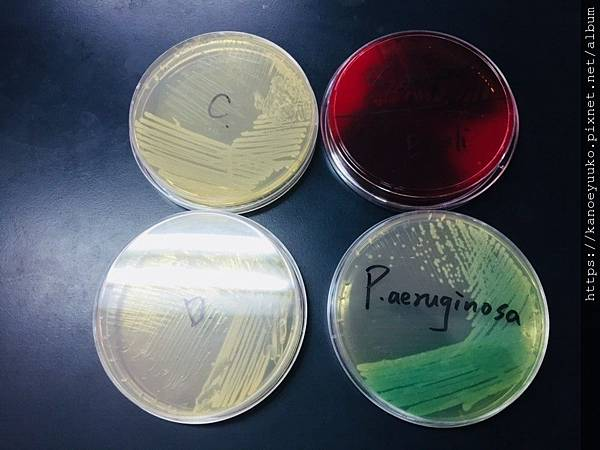 20181024 微生物w7_181024_0016.jpg