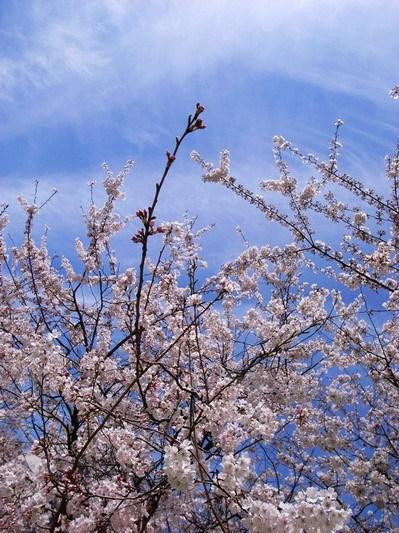 櫻花樹下5.jpg