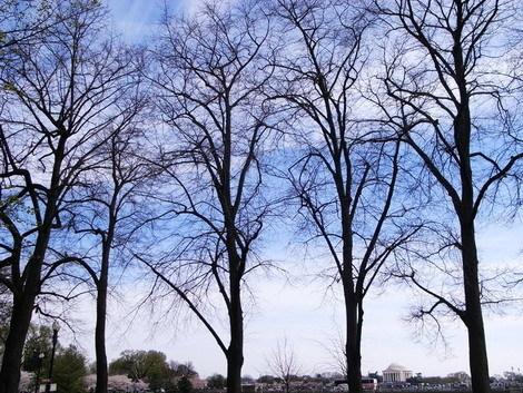 櫻花樹下9.jpg