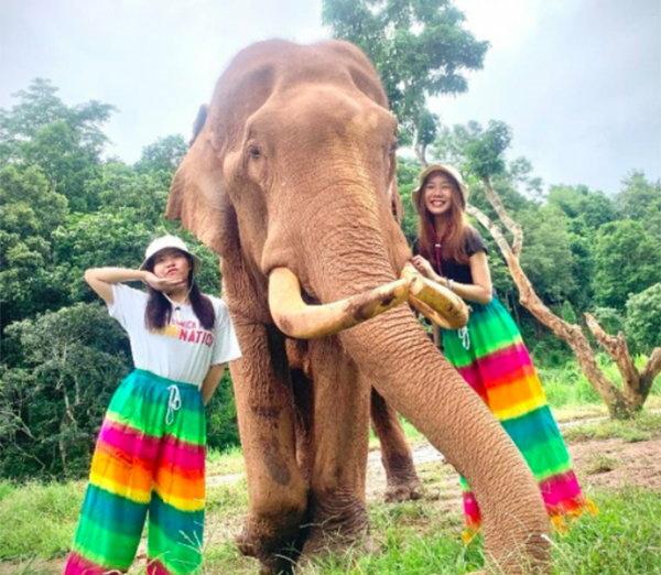 玩轉泰國領略泰北大自然風光:大象日托