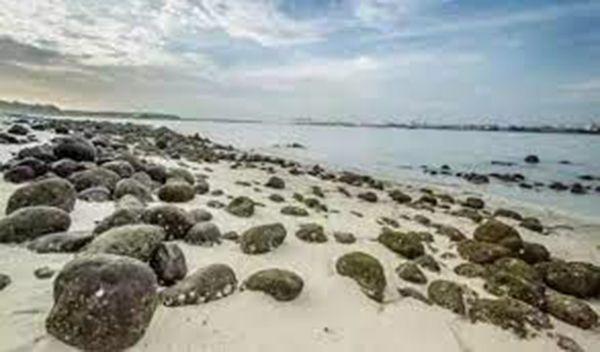 新加坡隱秘的看海角落:榜鵝沙灘