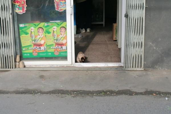 雜貨店小貓咪