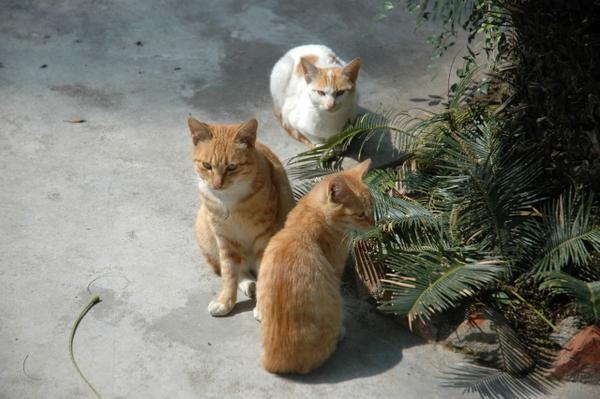 復興路-橘子家族