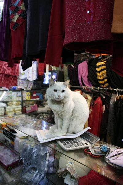 市場百貨行-白貓