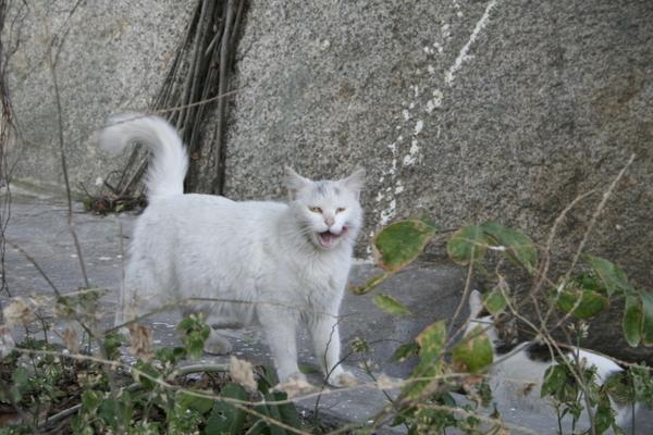 筆山路-社區貓