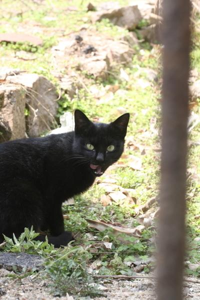 安海路破屋-黑貓